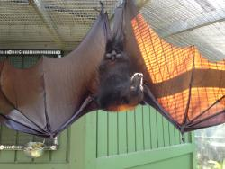 Lubee Bat Conservancy