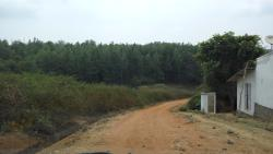 Mud road from main tar road to Gorukana resort.