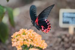 Eifalia Butterfly Garden
