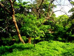 Jardín Botánico de Barranquilla