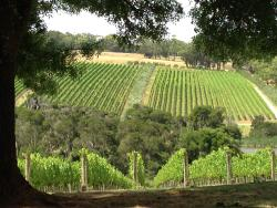 Grape & Graze Mornington Peninsula Winery Tours