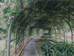 Taman Botani