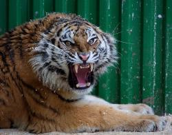 Zoogallery Zoo