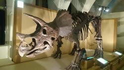 Tokai University Marine Science Museum  Natural History Museum