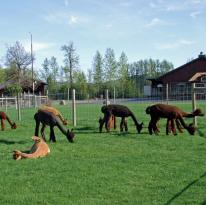 Meadowrock Alpacas Farm & Annex