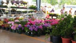 Piedmont Triad Farmers Market