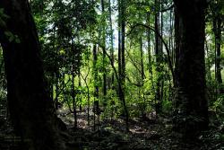 Smiths Bush Reserve