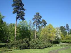 Городской парк Сосновка