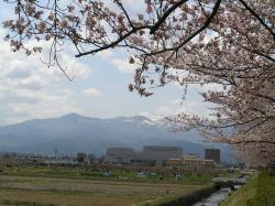 Arakawa Sakura Tsuzumi River Park
