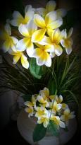 TROPICAL FLOWERS @ TDR