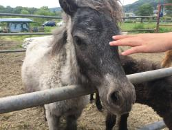 Sashima Horse Farm