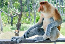 Sepilok Tropical Wildlife Adventure