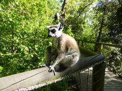 Reserve Zoologique de Calviac
