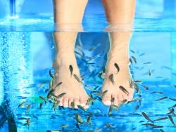 Sisi Fish Spa Therapy