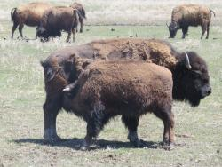 Terry Bison Ranch
