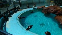 Katurahama Aquarium