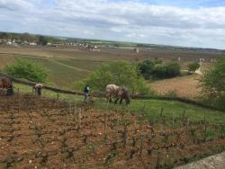 Max's Burgundy Wine Tour