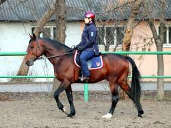 Horse Riding Club Stolichny Kentavr