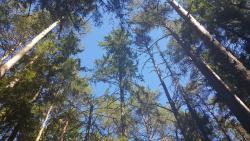 Majakivi-Pikanomme Trail