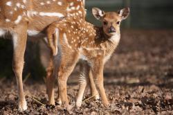 Parc Zoologique de Pescheray