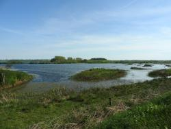 Rutland Water Nature Reserve (Anglian Water Bird Watching Centre)
