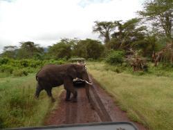 Shemeji Safari & Tours Tanzania