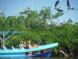 Vidasurf Ecotours