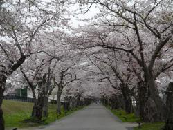 Ruins of Matsumae Clan Hekirichi Jinya