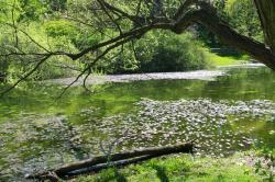 Jenkins Arboretum & Garden