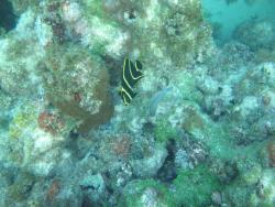 Snorkeling Antigua W.I.