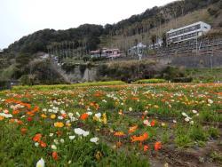 Shirahama Flower Park