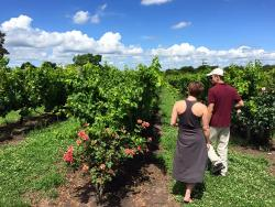 Feeling Uruguay Wine & Sightseeing Tours
