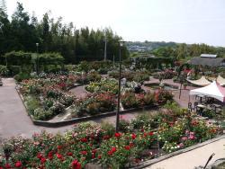 Osaka Prefecture Flower Garden