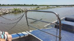 New Orleans Airboat Tours LLC