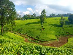 Kiambethu Farm