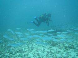 One Ocean Diving (Blue Bay)