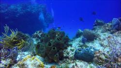 Tormentos Reef