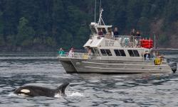 Blackfish Tours by Outer Island Expeditions