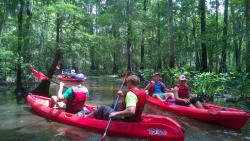 Kayak Swamp Tours