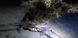Perth Ocean Diving