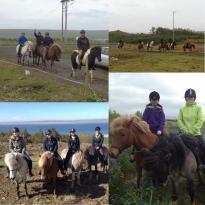 FL Hestar Horse Rental