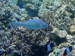 Ambara Island