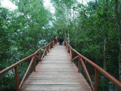 Mangrove Forest Batukaras