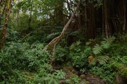 Akaka Pitstop