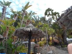 Palm trees around the pool
