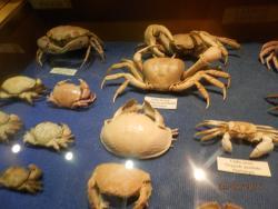 Le Musee de la Mer