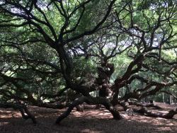 Very beautiful tree