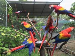 Macaw Sanctuary Natuwa
