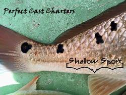 Perfect Cast Charters
