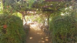 Page Spring Cellars Winery & Vineyards